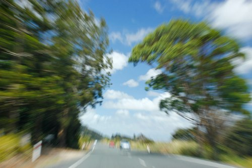 driving near dargaville2