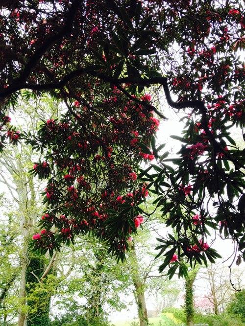 rhododendron garden03
