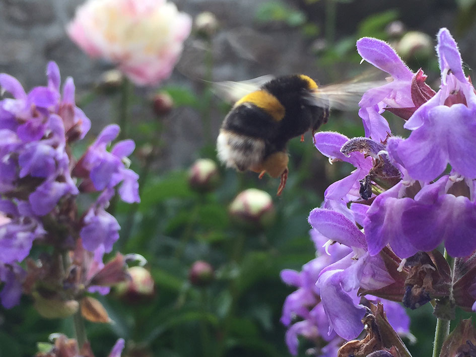 sage and bee