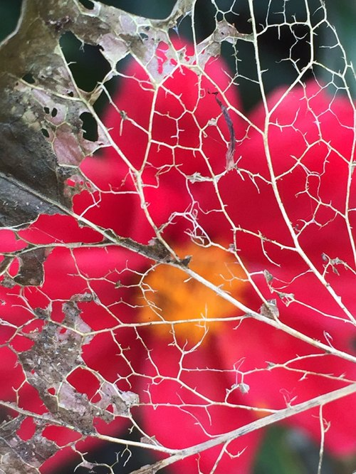 leaf-skeleton