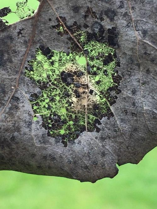 weird-leaf-02